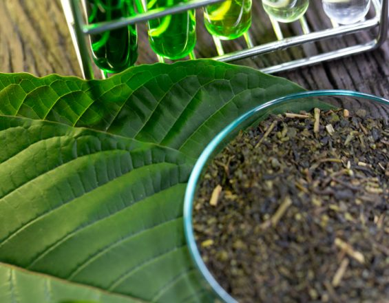 Growing your own kratom